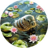 Otter in water lilies
