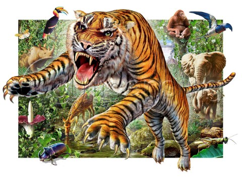 Tiger and wildlife