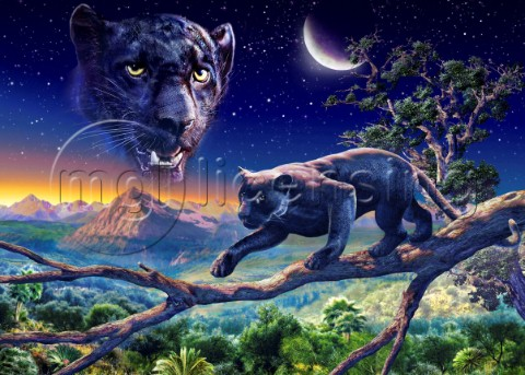 Twilight panther