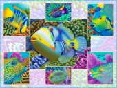Multi-pic - Fish Characters