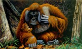 Orang-utan father and baby