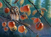 Owl with apples (NPI 0076)