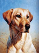 Dog portrait (NPI 0086)