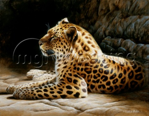 Leopard on rock NPI 0104