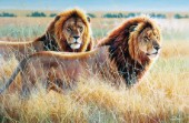 Two lions (NPI 0134)