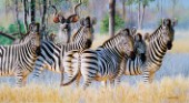 Zebra and kudu (NPI 0136)