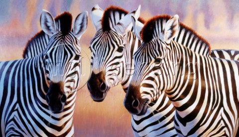 Big zebra heads NPI 0139