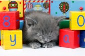 Alphabet cat asleep (CK414)