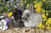 Two rabbits (A272)