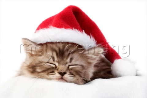 Sleeping Christmas cat C573