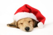 Sleeping Santa Puppy C597