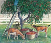 Apple lovers - goats
