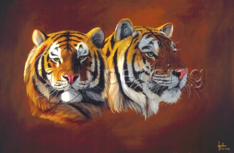 Two tiger heads