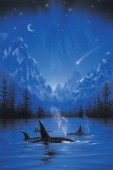Moonlight night journey - killer whale