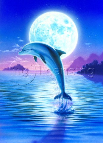 Day of the dolphin  midnight