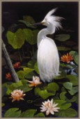 The Great White Egret