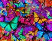 Butterfly Rainbow Explosion