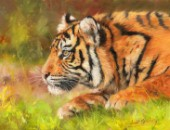 Amur Tiger Stalking