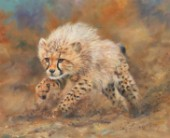 Cheetah Cub Running