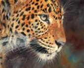 Leopard Close up Portrait