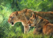 Lionesses Forest
