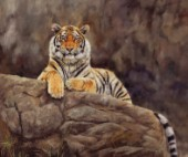 Siberian Tiger on Rock