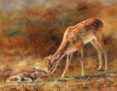 Nile Lechwe and Newborn