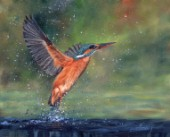 Oil on canvas. Kingfisher by Dacvid Stribbling.
