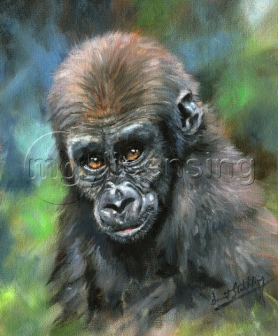 Young gorilla Oil on canvas by David Stribbling