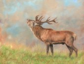 Red Deer Stag in the rutting season. Oil on canvas.