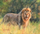 African Lion, oil on canvas.