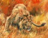 Male Lion, oil on canvas with brush and palette knife