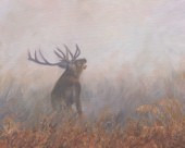 Oil on canvas. European Red Deer Stag. Early morning at Tatton Park.