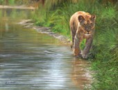 Waters Edge Lioness