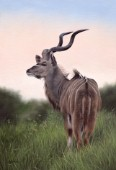 Oil painting of a kudu standing in the grass at sunrise.