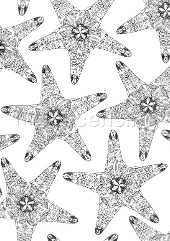 ILLUSTRATED FLORAL STARFISH