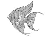 Neeti-Sea-AngelFish
