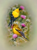 goldfinch & thistle cps190