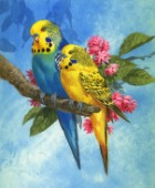 Budgies on Blue Background