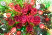 Christmas-Zoon Red Roses.jpg