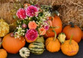 2250-Dahlia buquet and Pumpkins