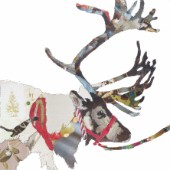 Heading East-Reindeer