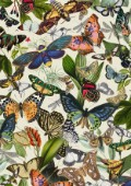 Archive Butterfly Print